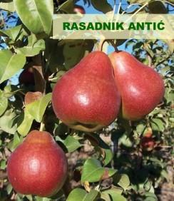 Sadnice voća za jesenju sadnju