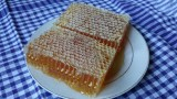Prvoklasni med u saću