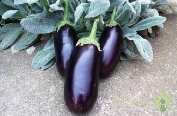 Seme povrca