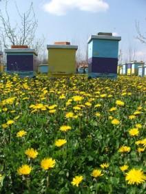 Pčelinjaci Stanković Mladenovac