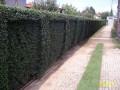Održavanje i uređenje dvorišta, bašte - Sadnice - Usluge baštovana