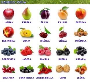 Sadnice voća I klasa