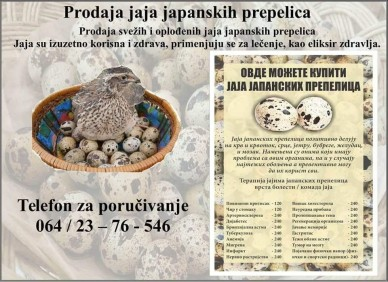 Prodaja uvek svežih i oplođenih jaja japanskih prepelica